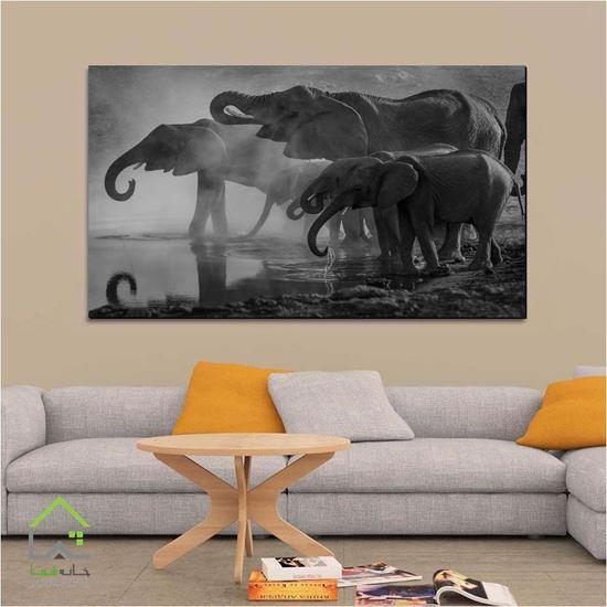 فیل افریقایی