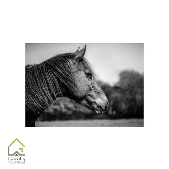 تابلوی دیواری اسب